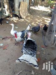 Turkey,More ThàN10kg. | Livestock & Poultry for sale in Mombasa, Bamburi
