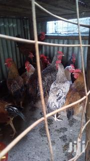 Kienyeji Chicken | Livestock & Poultry for sale in Machakos, Syokimau/Mulolongo