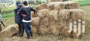 Barley And Oats Hey | Feeds, Supplements & Seeds for sale in Nakuru, Mau Narok