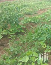 Embu Mbeere Agriculural Land | Land & Plots For Sale for sale in Embu, Mbeti North