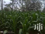 Prime Plots | Land & Plots For Sale for sale in Kajiado, Ongata Rongai