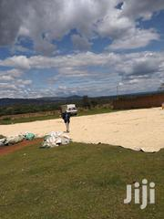 Dry White Maize | Meals & Drinks for sale in Trans-Nzoia, Endebess