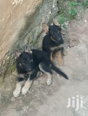 Baby Male Purebred German Shepherd Dog | Dogs & Puppies for sale in Mombasa, Likoni