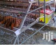Electrochicken Cages | Farm Machinery & Equipment for sale in Nairobi, Karen