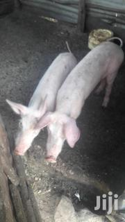Imported Pigs | Other Animals for sale in Kisumu, West Seme