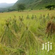 Boma Rhodes Seeds Grass | Feeds, Supplements & Seeds for sale in Kisii, Masimba