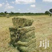 Boma Rhodes Seeds Hay | Feeds, Supplements & Seeds for sale in Taita Taveta, Kaloleni