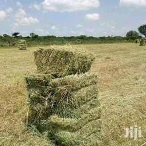Boma Rhodes Seeds Hay