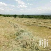 Boma Seeds Grass | Feeds, Supplements & Seeds for sale in Nyeri, Dedan Kimanthi