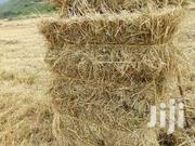Boma Rhodes Grass Seeds | Feeds, Supplements & Seeds for sale in Narok, Narok Town