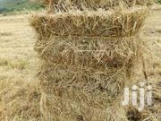 Boma Rhodes Hay Seeds Grass | Feeds, Supplements & Seeds for sale in Kiambu, Kikuyu