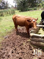 A Very Good Cow   Other Animals for sale in Kericho, Litein