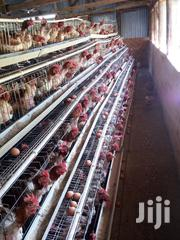 Chicken Cages For Sale In Nairobi 256 Birds | Farm Machinery & Equipment for sale in Nairobi, Kahawa
