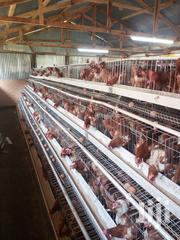 Poultry Laying Cages And Industry Equipment | Farm Machinery & Equipment for sale in Nairobi, Kahawa
