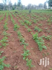 Shambas For LEASE | Land & Plots for Rent for sale in Nyandarua, Mirangine