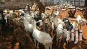 Goats And Sheep For Sale | Livestock & Poultry for sale in Kiambu, Kiuu