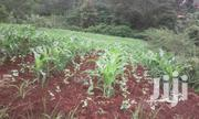 1/2 Ha Land At Difathas For Sale | Land & Plots For Sale for sale in Embu, Mwea