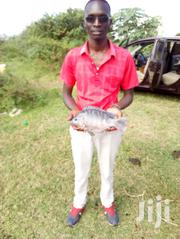Fish Farming Consultations | Other Services for sale in Kisumu, Shaurimoyo Kaloleni