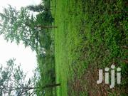 1/4 Acre Land for Sale | Land & Plots For Sale for sale in Kiambu, Thika