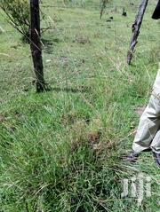 Land 1/2 An Acre Elgonview With Title Upper Elgonview | Land & Plots For Sale for sale in Uasin Gishu, Langas