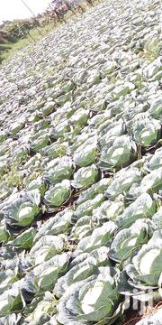 Cabbage On Wholesale | Meals & Drinks for sale in Kiambu, Riabai