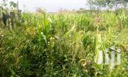 Plot for Sale at Ergeton Lions, 100m From Main Road. | Land & Plots For Sale for sale in Nakuru, Njoro