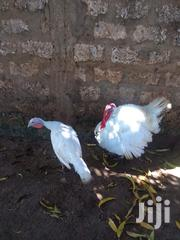 White Turkey | Livestock & Poultry for sale in Mombasa, Tudor