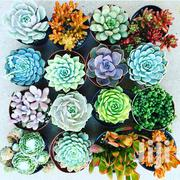 Succulents | Garden for sale in Kiambu, Gitaru