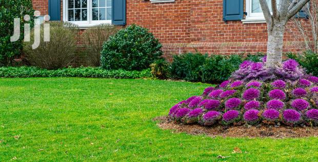 Archive: Affordable Lanscaping