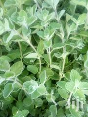Oregano Herb Seedlings | Feeds, Supplements & Seeds for sale in Laikipia, Nanyuki