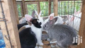 Rabbits For Pets