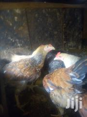 Kienyeji Improved 3months Old | Livestock & Poultry for sale in Nairobi, Kahawa West