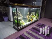 Huge Aquariums & Internal Decor | Landscaping & Gardening Services for sale in Nairobi, Kilimani