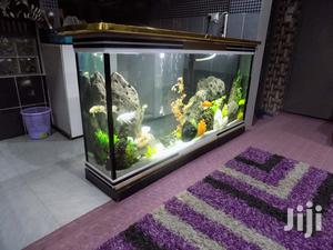 Huge Aquariums & Internal Decor