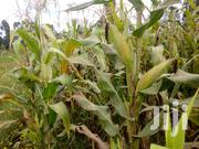 1 Acre For Sale | Land & Plots For Sale for sale in Nyandarua, Weru