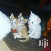 Baby Female Purebred Turkish Van | Cats & Kittens for sale in Nairobi, Kahawa West