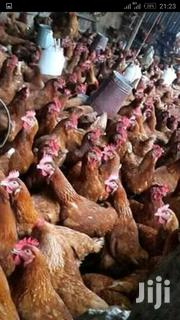 Chick Chick | Livestock & Poultry for sale in Kiambu, Limuru East