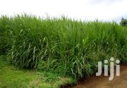 1/4 Acre Well Grown Fodder | Feeds, Supplements & Seeds for sale in Kiambu, Githunguri
