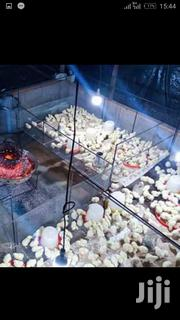 Broiler New System | Livestock & Poultry for sale in Nairobi, Nairobi Central