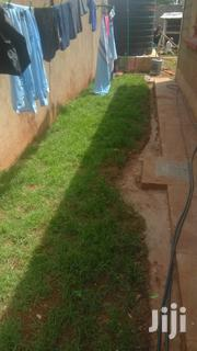 Arabic Grass for Compound Beatification | Garden for sale in Nairobi, Ngando