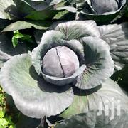 Red Cabbage | Feeds, Supplements & Seeds for sale in Nyeri, Magutu