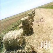 Rice Straws Hay Bales | Feeds, Supplements & Seeds for sale in Embu, Mwea