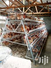 Chicken Cages | Farm Machinery & Equipment for sale in Nairobi, Kasarani