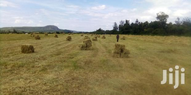 Archive: Hay For Sell