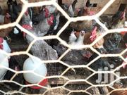 Kienyeji Birds Available For Sale In Nkubu | Livestock & Poultry for sale in Meru, Nkuene