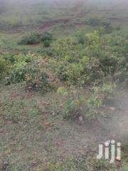 Kambiti 1 Acre For Sale | Land & Plots For Sale for sale in Murang'a, Kambiti