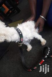 Dog Collar N Matching Lead | Pet's Accessories for sale in Nairobi, Mowlem