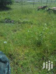Is Good One   Land & Plots For Sale for sale in Laikipia, Ngobit