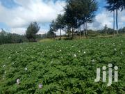 10 Acres Farm in Nyandarua | Land & Plots For Sale for sale in Nyandarua, Mirangine