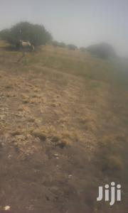 Katani Plot for Sale With Title | Land & Plots For Sale for sale in Machakos, Kinanie